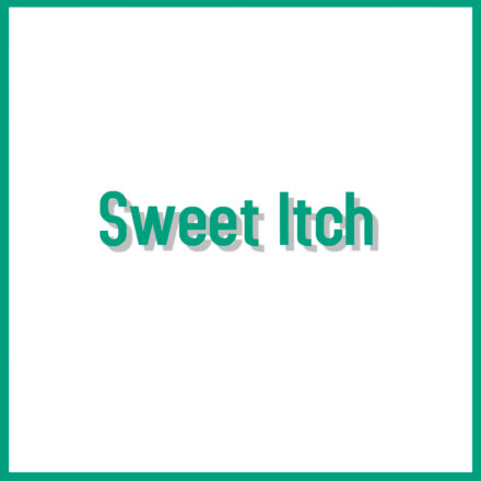 Sweet Itch